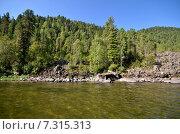 Купить «Вид на озеро Телецкое летом», фото № 7315313, снято 4 августа 2014 г. (c) Александр Карпенко / Фотобанк Лори