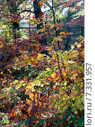 Купить «Осенний сезон», фото № 7331957, снято 18 ноября 2014 г. (c) Татьяна Кахилл / Фотобанк Лори