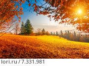 Купить «Colorful autumn landscape», фото № 7331981, снято 13 октября 2014 г. (c) Goinyk Volodymyr / Фотобанк Лори
