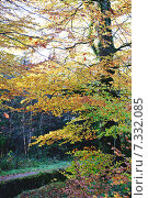 Купить «Осенний парк», фото № 7332085, снято 18 ноября 2014 г. (c) Татьяна Кахилл / Фотобанк Лори