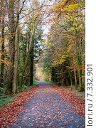 Купить «Дорога в осеннем лесу», фото № 7332901, снято 18 ноября 2014 г. (c) Татьяна Кахилл / Фотобанк Лори