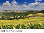 Typical landscape with white farmhouse sunflowers and olive groves near Arcos de la Frontera Andalucía Spain. Стоковое фото, агентство BE&W Photo / Фотобанк Лори
