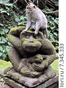 Купить «Long-tailed macaque (Macaca fascicularis) in Sacred Monkey Forest, Ubud, Indonesia», фото № 7345333, снято 23 октября 2018 г. (c) BE&W Photo / Фотобанк Лори