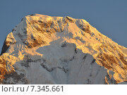 Купить «Nepal, Annapurna Conservation Area, Annapurna South view from Tadapani, Nepal Himalaya», фото № 7345661, снято 20 июля 2019 г. (c) BE&W Photo / Фотобанк Лори