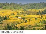 Купить «Terrace rice fields, Bali, Indonesia», фото № 7345753, снято 17 декабря 2018 г. (c) BE&W Photo / Фотобанк Лори