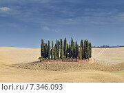 Harvested wheat fields, ploughed field and cypress trees, landscape near Montalcino, Province of Siena, Toscany, Italy, Europe. Стоковое фото, агентство BE&W Photo / Фотобанк Лори