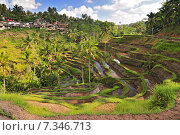Купить «The most dramatic and spectacular rice terraces in Bali near the village of Tegallalang.», фото № 7346713, снято 17 декабря 2018 г. (c) BE&W Photo / Фотобанк Лори