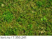 Зеленая трава. Стоковое фото, фотограф Сотникова Кристина / Фотобанк Лори