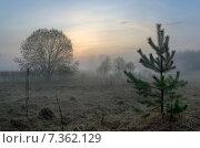 Купить «Туманное утро на лугу в Московской области в мае», фото № 7362129, снято 3 мая 2015 г. (c) Валерий Боярский / Фотобанк Лори
