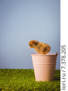 Купить «Stuffed chick in pink bucket», фото № 7378205, снято 6 февраля 2015 г. (c) Wavebreak Media / Фотобанк Лори