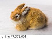 Купить «Ginger bunny rabbit», фото № 7378601, снято 6 февраля 2015 г. (c) Wavebreak Media / Фотобанк Лори