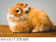 Купить «Ginger bunny rabbit», фото № 7378669, снято 6 февраля 2015 г. (c) Wavebreak Media / Фотобанк Лори