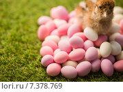 Купить «Stuffed chick with easter eggs», фото № 7378769, снято 6 февраля 2015 г. (c) Wavebreak Media / Фотобанк Лори