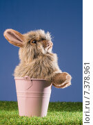 Купить «Bunny rabbit in pink bucket», фото № 7378961, снято 6 февраля 2015 г. (c) Wavebreak Media / Фотобанк Лори