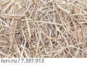 Купить «dry grass or hay texture», фото № 7397913, снято 7 февраля 2015 г. (c) Syda Productions / Фотобанк Лори