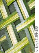 Купить «green palm tree leaf grid texture», фото № 7399293, снято 7 февраля 2015 г. (c) Syda Productions / Фотобанк Лори
