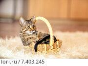 Котёнок в плетёной корзинке. Стоковое фото, фотограф Савчук Алексей / Фотобанк Лори