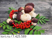 Купить «Белые грибы и ягоды рябины на старом столе», фото № 7425589, снято 29 августа 2014 г. (c) Наталья Осипова / Фотобанк Лори