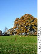 Купить «Осенний дуб в парке», фото № 7442353, снято 4 декабря 2013 г. (c) Татьяна Кахилл / Фотобанк Лори