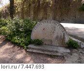 Купить «Солнечная тропа в Ливадийском парке (Крым)», фото № 7447693, снято 7 мая 2015 г. (c) Маргарита Лир / Фотобанк Лори