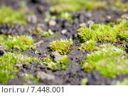 Ярко зеленый мох на земле. Стоковое фото, фотограф Екатерина Воронкова / Фотобанк Лори