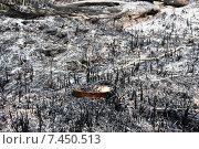 Пожар на торфянике. Стоковое фото, фотограф Андрей Подольский / Фотобанк Лори