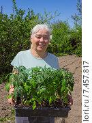 Купить «Женщина в огороде с помидорной рассадой», фото № 7457817, снято 9 апреля 2015 г. (c) Александр Романов / Фотобанк Лори