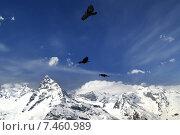 Купить «Альпийская галка (Pyrrhocorax graculus) летит над горами», фото № 7460989, снято 17 апреля 2010 г. (c) Анна Полторацкая / Фотобанк Лори