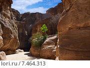 Купить «Ущелье Сик Петра, Иордания», фото № 7464313, снято 1 апреля 2015 г. (c) Знаменский Олег / Фотобанк Лори