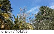 Купить «Южная природа, пальмы и хвойные деревья», фото № 7464873, снято 9 мая 2015 г. (c) DiS / Фотобанк Лори