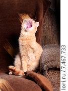 Купить «Рыжий кот зевает», фото № 7467733, снято 22 мая 2015 г. (c) Яна Королёва / Фотобанк Лори