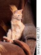 Купить «Рыжий кот сидит на диване», эксклюзивное фото № 7467737, снято 22 мая 2015 г. (c) Яна Королёва / Фотобанк Лори