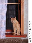 Купить «Рыжий кот сидит на подоконнике», фото № 7467757, снято 22 мая 2015 г. (c) Яна Королёва / Фотобанк Лори