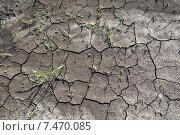 Купить «Растрескавшаяся земля в Подмосковье», фото № 7470085, снято 20 мая 2015 г. (c) Tatiana Tetereva / Фотобанк Лори
