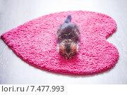 Купить «Лежащий на розовом коврике котенок», фото № 7477993, снято 23 мая 2015 г. (c) Светлана Мамонтова / Фотобанк Лори