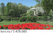 """Купить «Парк """"Екатерингоф"""". Санкт-Петербург. Весна», видеоролик № 7478085, снято 25 мая 2015 г. (c) Звездочка ясная / Фотобанк Лори"""