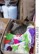 Купить «Кошка с котенком в коробке с разноцветными авоськами на рынке в Стамбуле», эксклюзивное фото № 7483093, снято 21 апреля 2015 г. (c) Илюхина Наталья / Фотобанк Лори