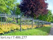 Купить «Красивая ограда», эксклюзивное фото № 7486277, снято 24 мая 2015 г. (c) Svet / Фотобанк Лори