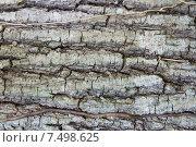 Купить «tree trunk bark texture», фото № 7498625, снято 12 февраля 2015 г. (c) Syda Productions / Фотобанк Лори