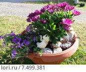Купить «Дизайн цветочного вазона», фото № 7499381, снято 5 сентября 2014 г. (c) Tamara Sushko / Фотобанк Лори