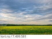 Цветущее поле люцерны. Стоковое фото, фотограф Евгений Дробжев / Фотобанк Лори