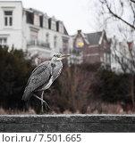 Городская цапля / Heron City. Стоковое фото, фотограф Татьяна Кривая / Фотобанк Лори