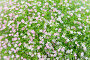 beautiful wildflowers field texture, фото № 7503037, снято 7 февраля 2015 г. (c) Syda Productions / Фотобанк Лори