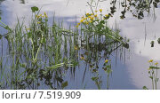 Купить «Купальница», видеоролик № 7519909, снято 3 июня 2015 г. (c) Звездочка ясная / Фотобанк Лори