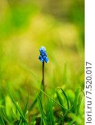 Синий цветок. Стоковое фото, фотограф Сотникова Кристина / Фотобанк Лори