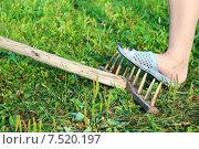 Наступить на грабли. Стоковое фото, фотограф Денис Рубцов / Фотобанк Лори
