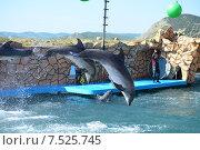 Купить «Анапский Утришский дельфинарий. Шоу морских млекопитающих», фото № 7525745, снято 6 июня 2015 г. (c) Игорь Архипов / Фотобанк Лори