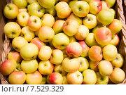 Купить «ripe apples in basket at food market or farm», фото № 7529329, снято 20 декабря 2014 г. (c) Syda Productions / Фотобанк Лори