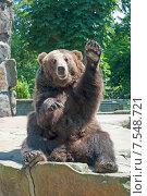 Купить «Медведь приветствует  посетителей зоопарка, машет лапой», эксклюзивное фото № 7548721, снято 13 июня 2015 г. (c) Svet / Фотобанк Лори