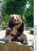 Купить «Медведь машет лапой в зоопарке», эксклюзивное фото № 7550873, снято 13 июня 2015 г. (c) Svet / Фотобанк Лори